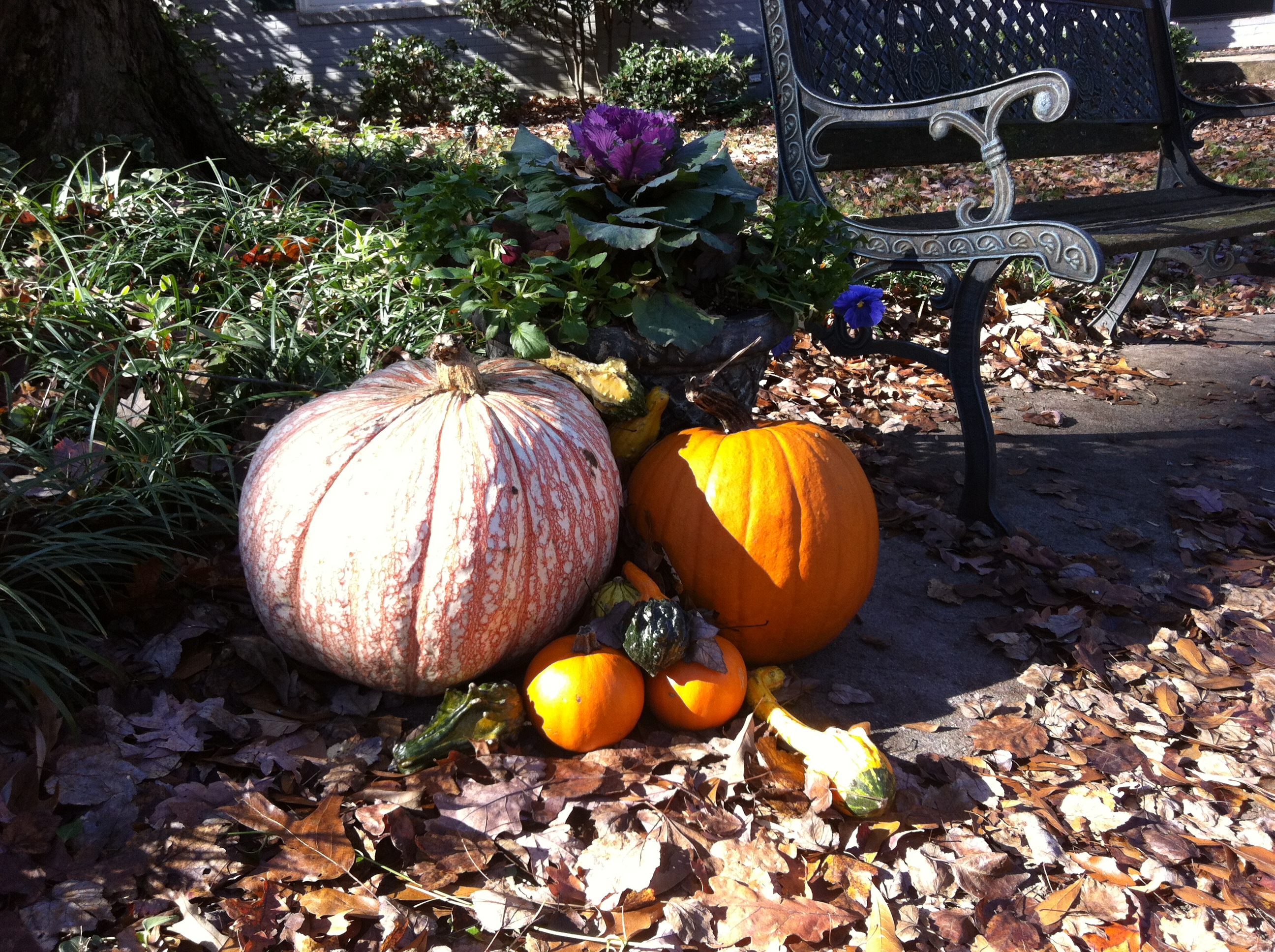 Pumpkins On My Walk