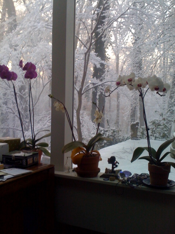 Orchids Watching Snow Fall