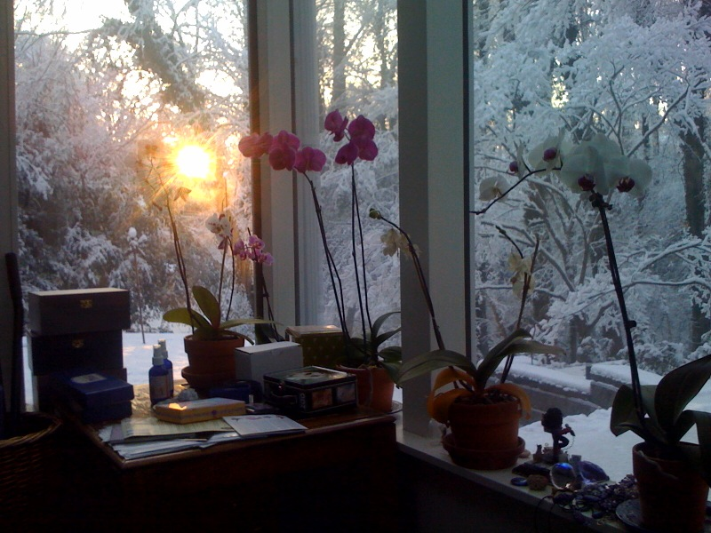 Orchids Watching Sunrise Over Snow