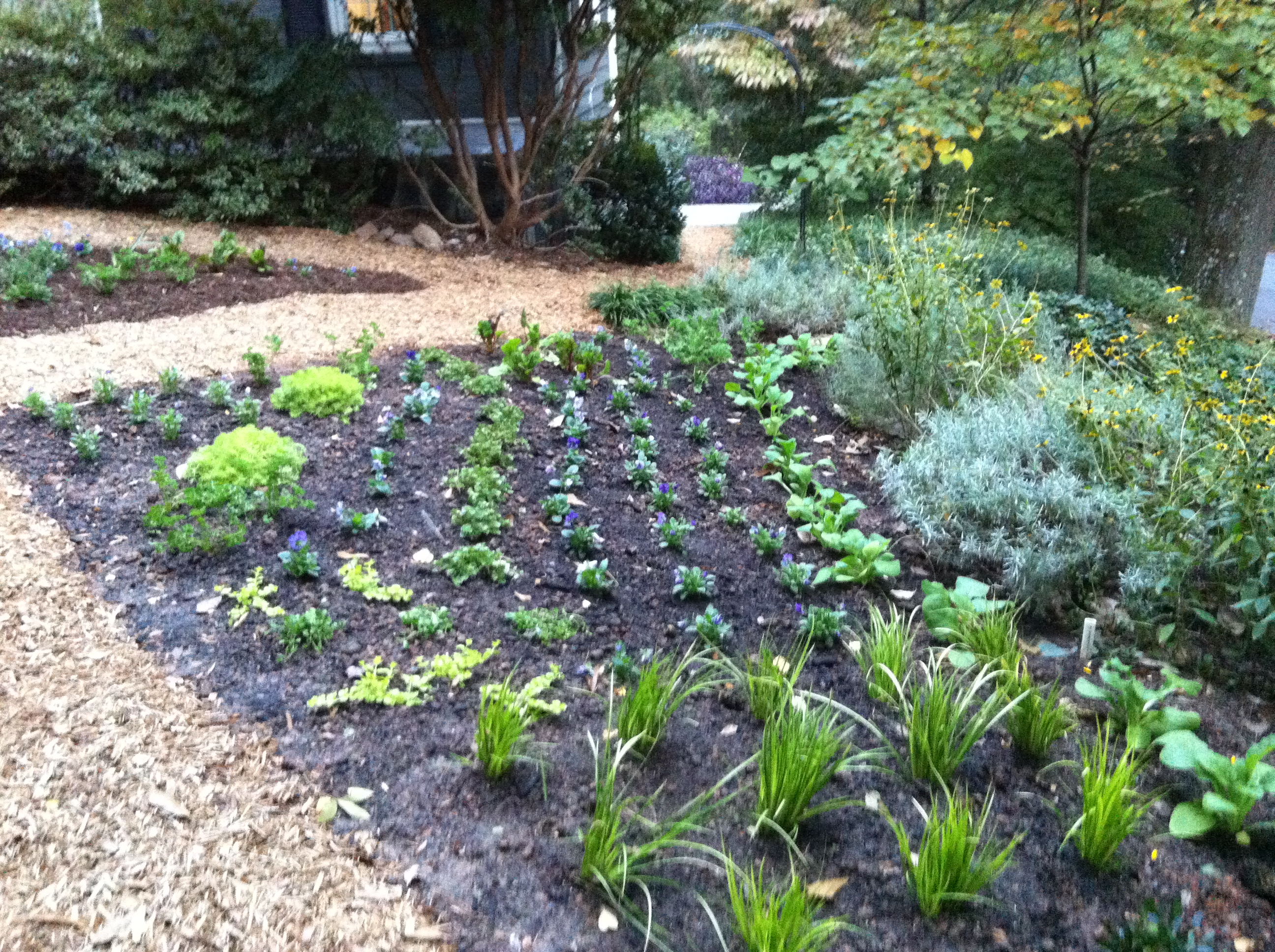 Xeriscaping In My Front Garden