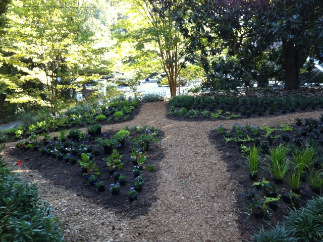 Xeriscape Your Garden For Your Health
