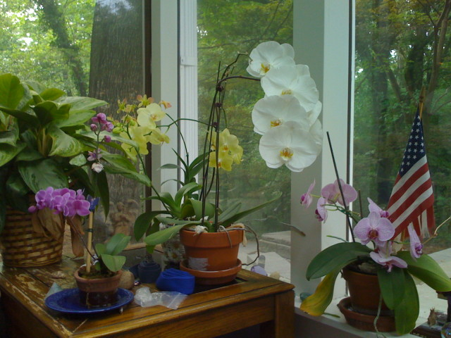 You Can't Get Over The Orchids