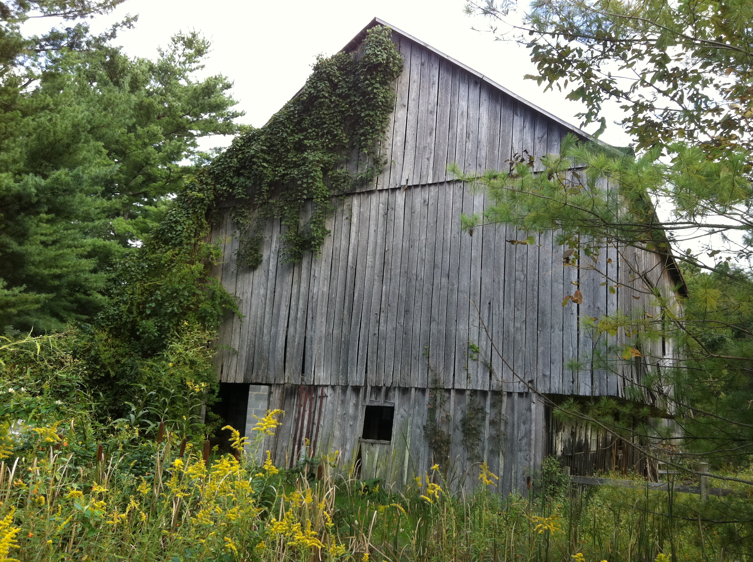 Old Barn Near Fairfield, Virginia