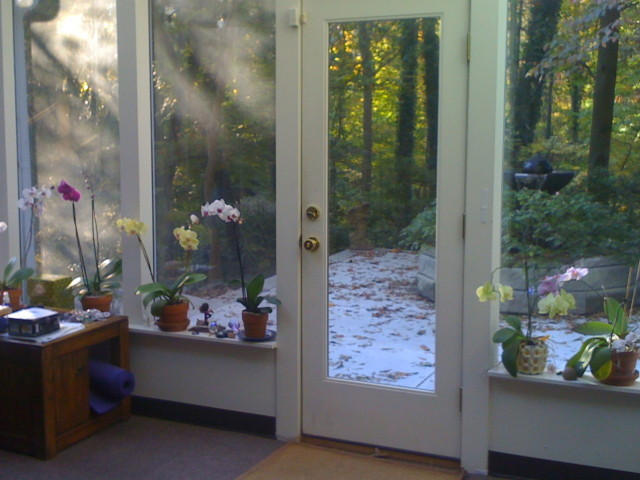 Orchids In My Studio