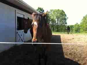 Horse At Farm Outside Athens, Georgia