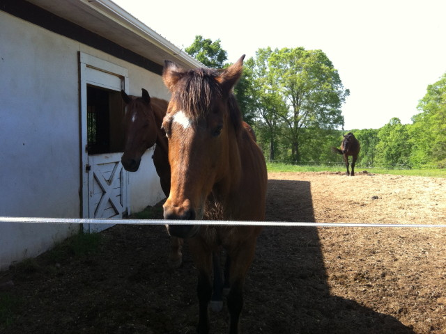 Medical Intuitive Reading For A Horse
