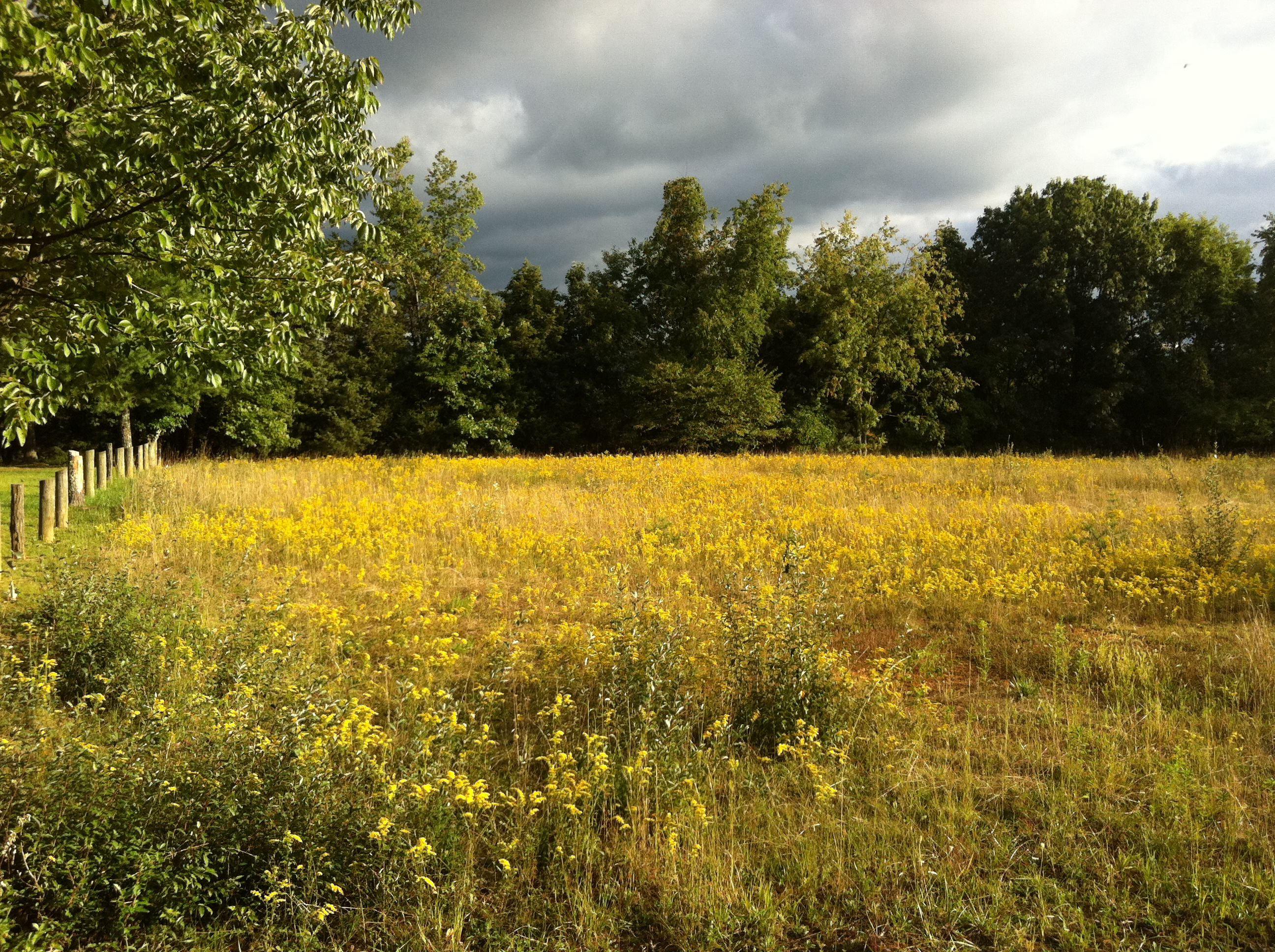 Field Near Staunton, Virginia