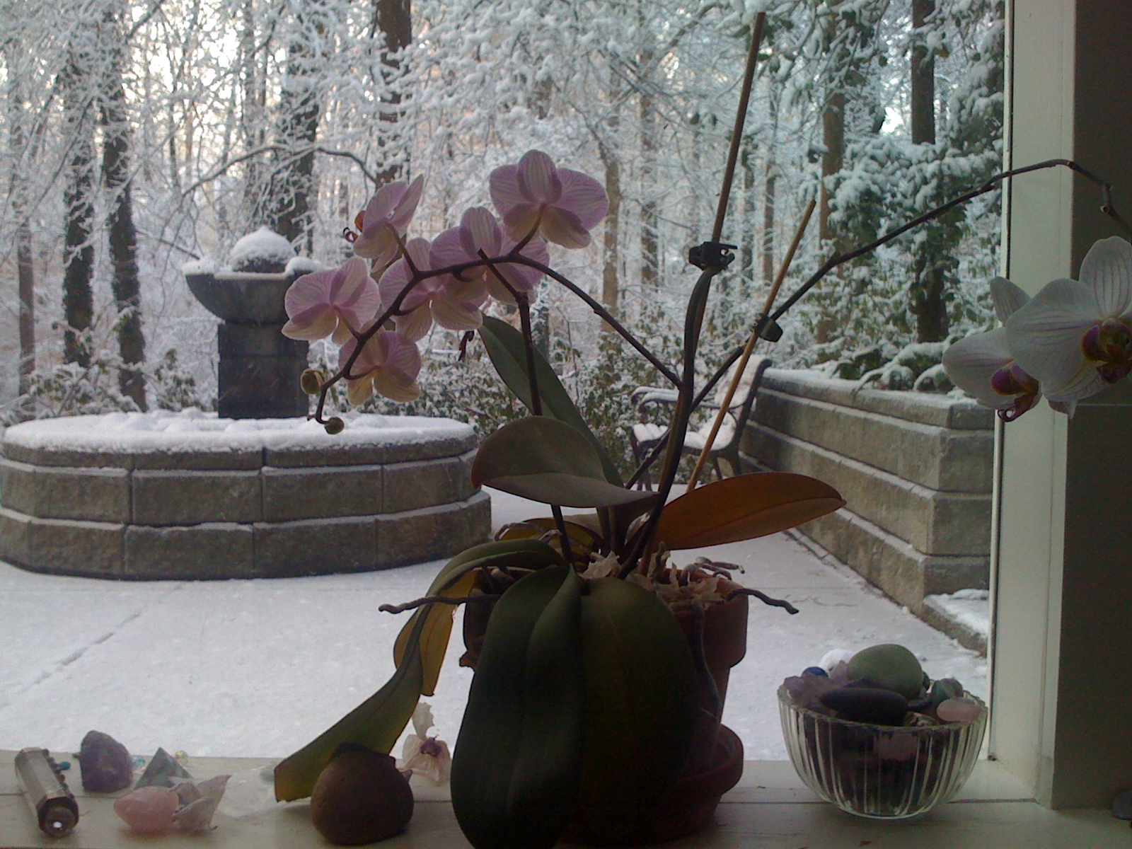 Orchids Overlooking My Fountain In The Snow