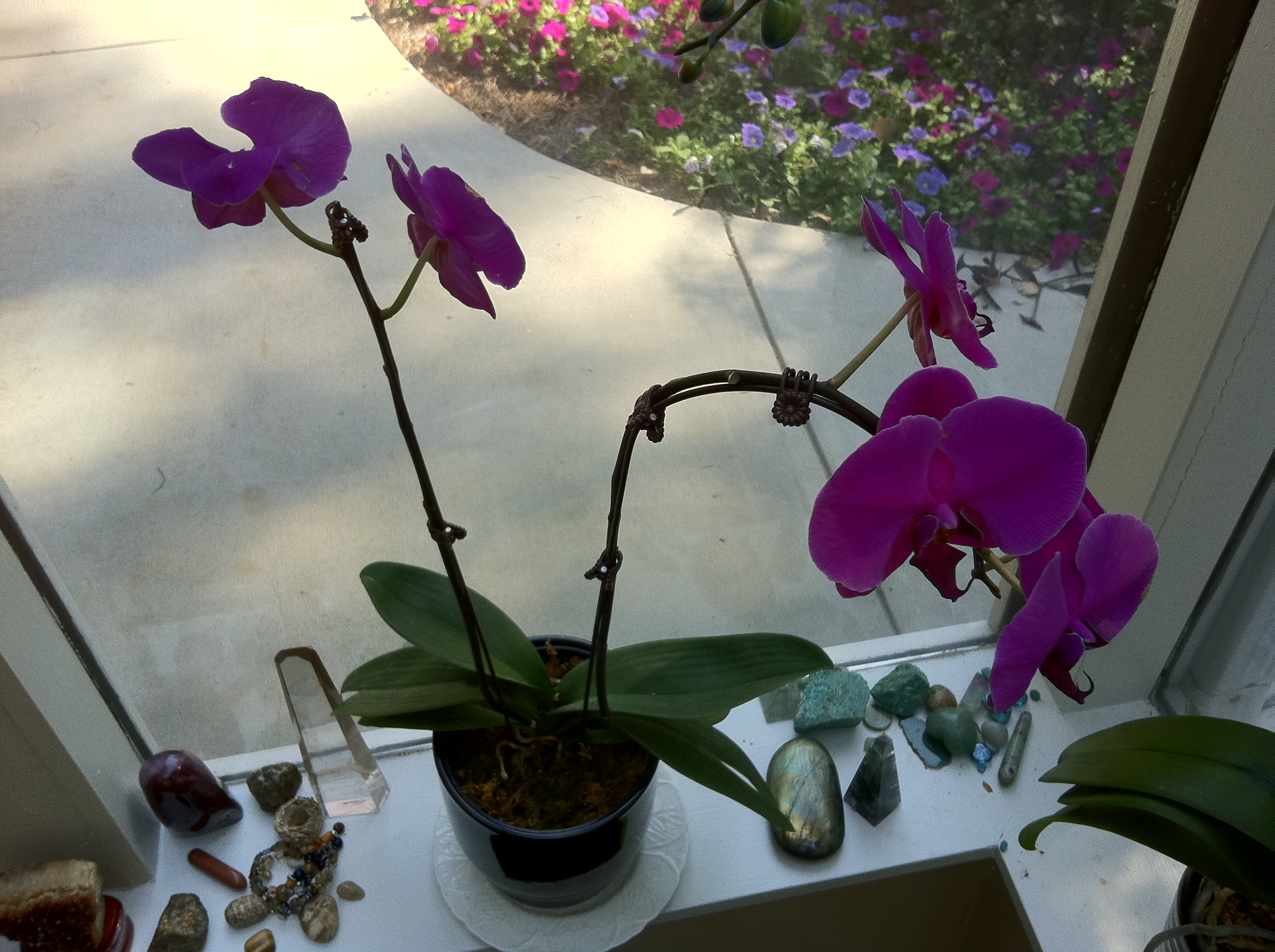Orchids And Crystals In My Studio Window