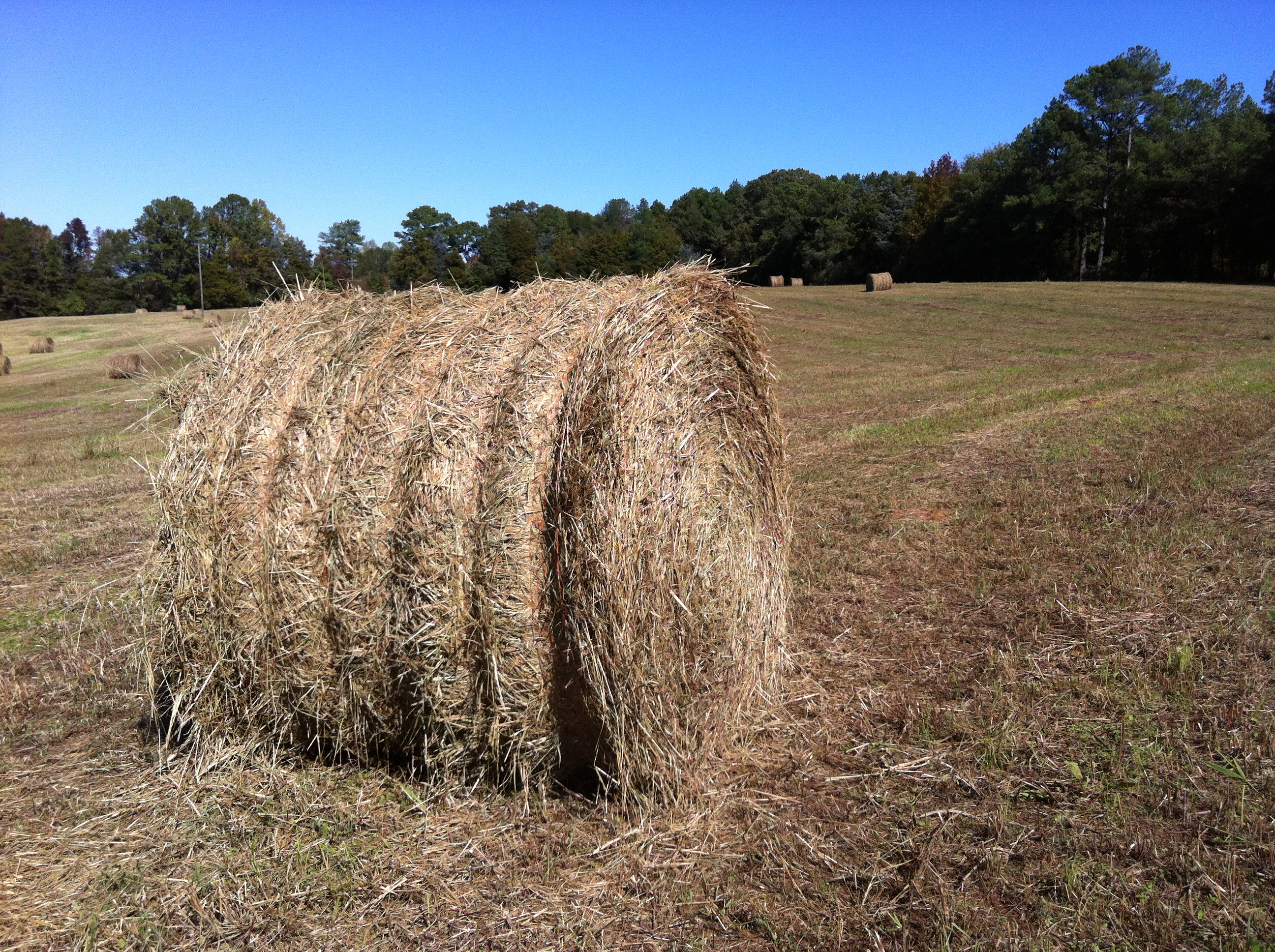 Hay Bale, Farm Near Athens, Georgia