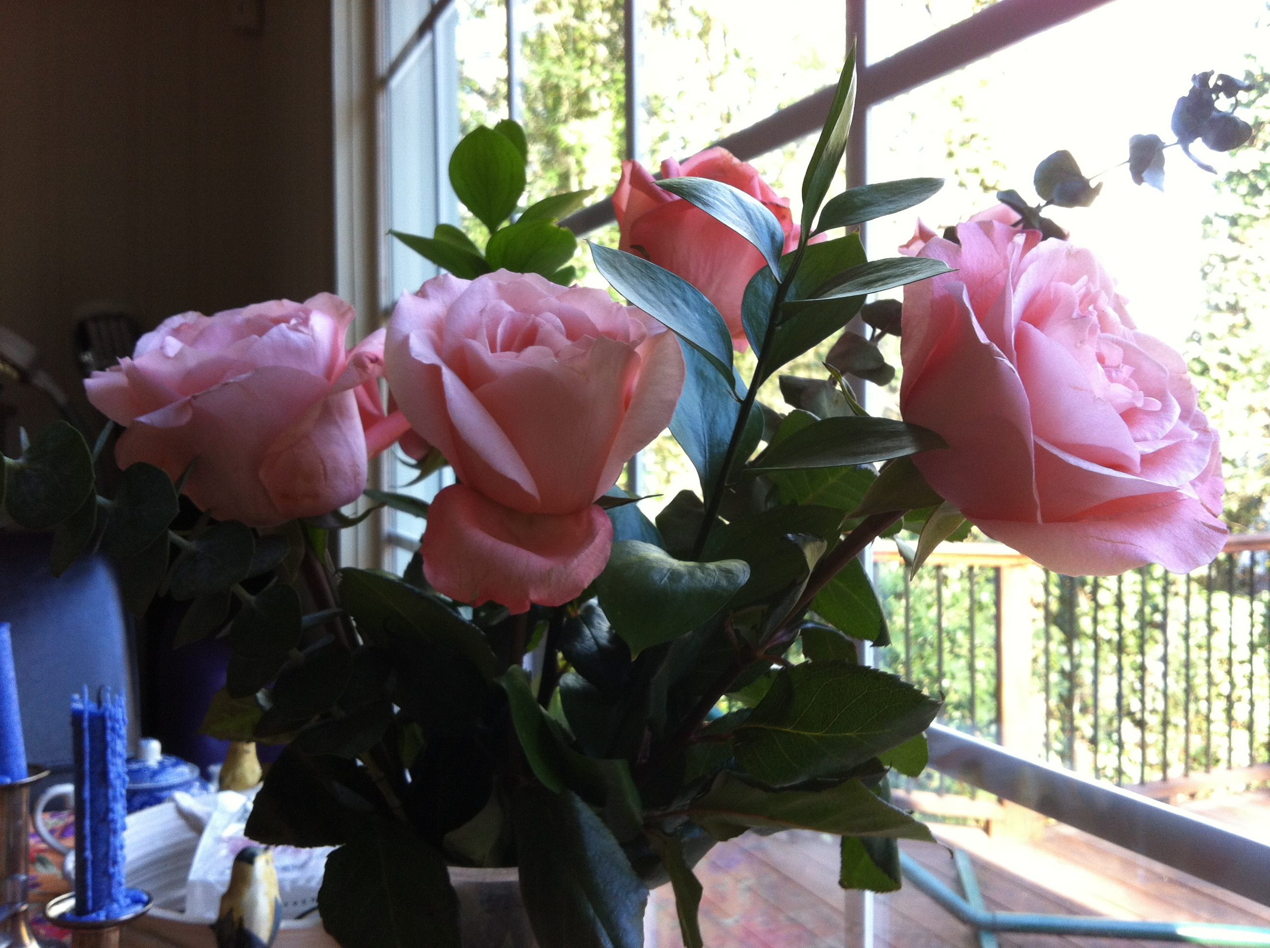 Pink Roses In Window