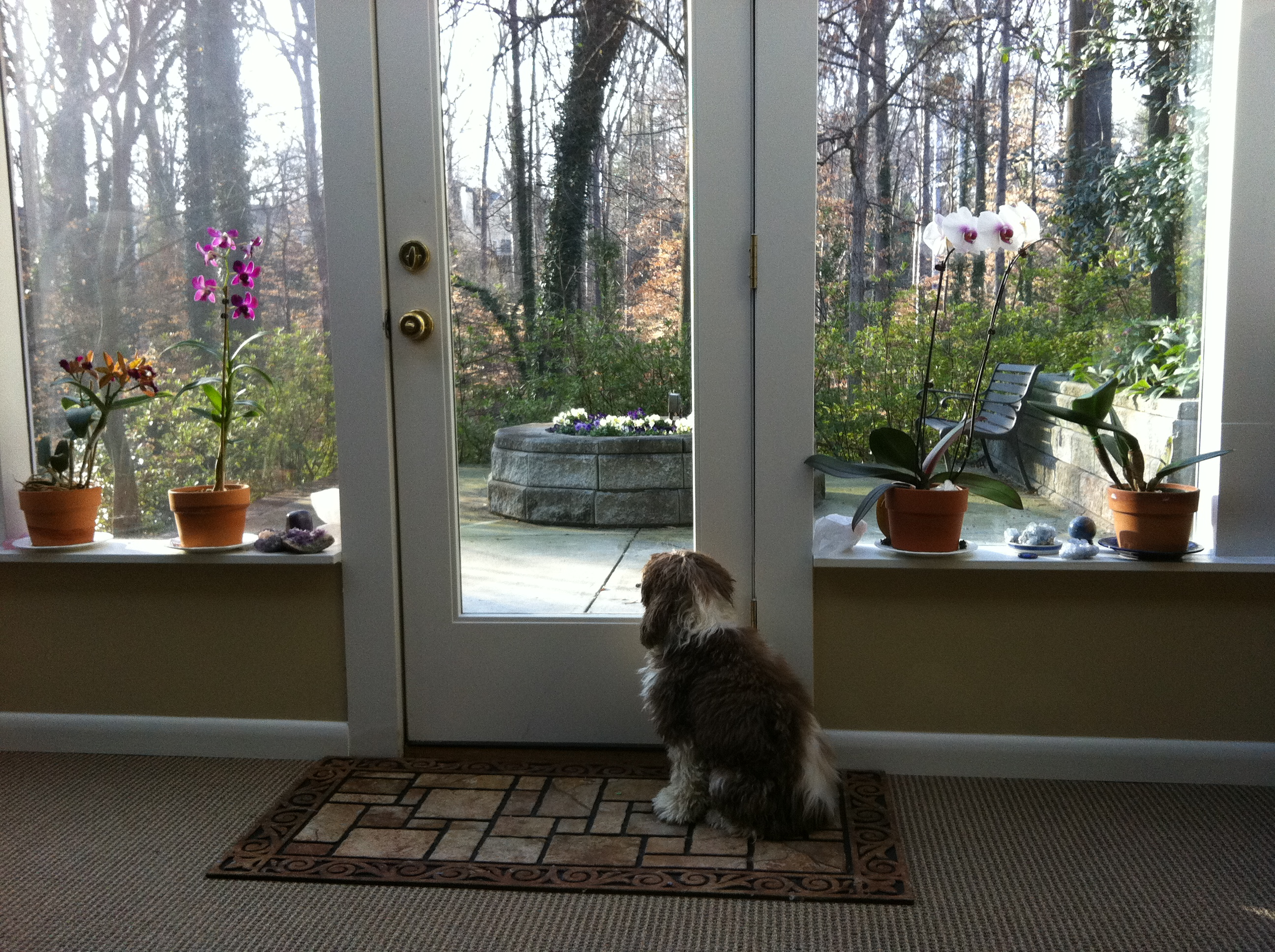 Belle Waiting For A Client In My Studio