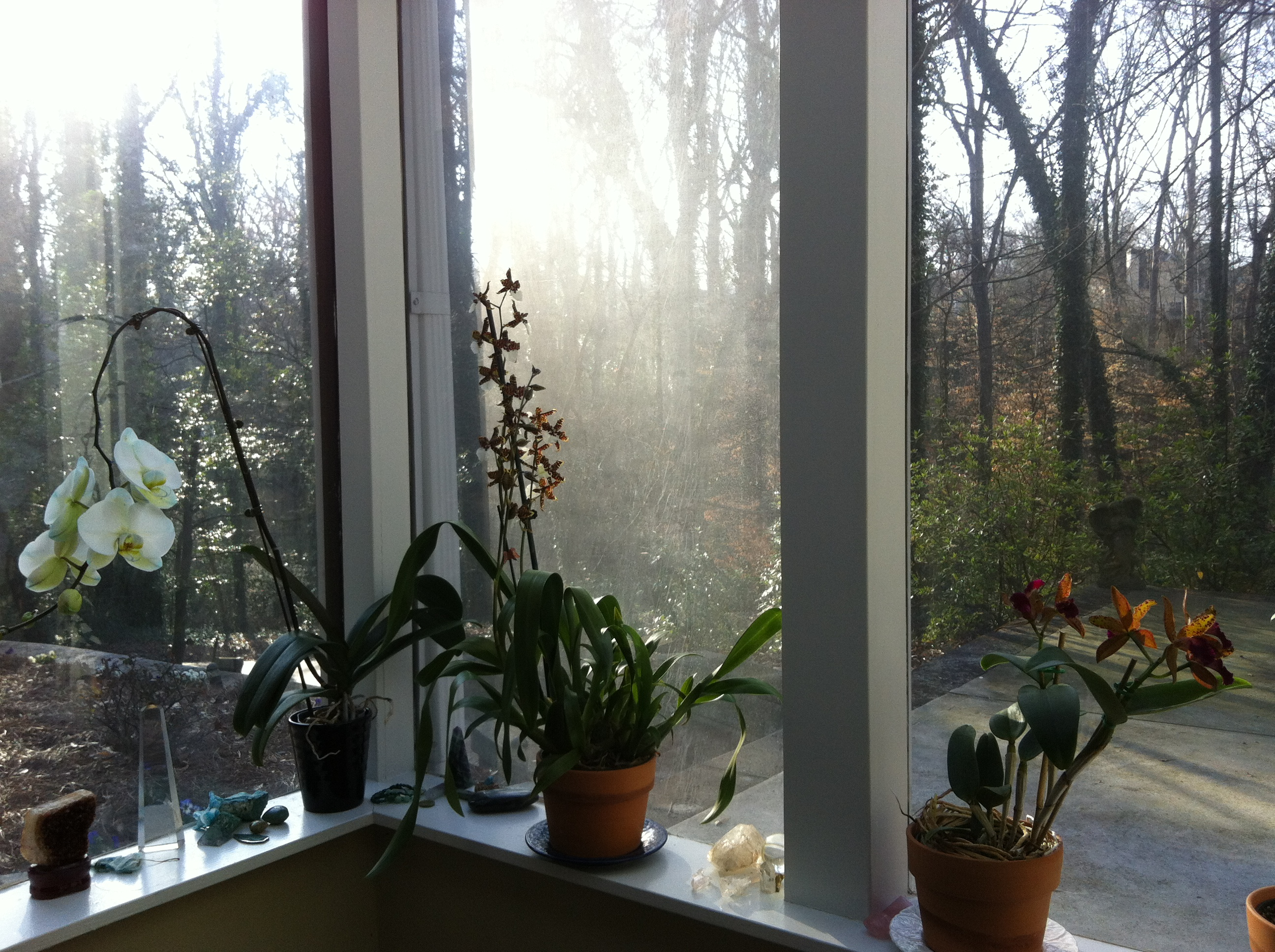 Orchids In My Studio Window
