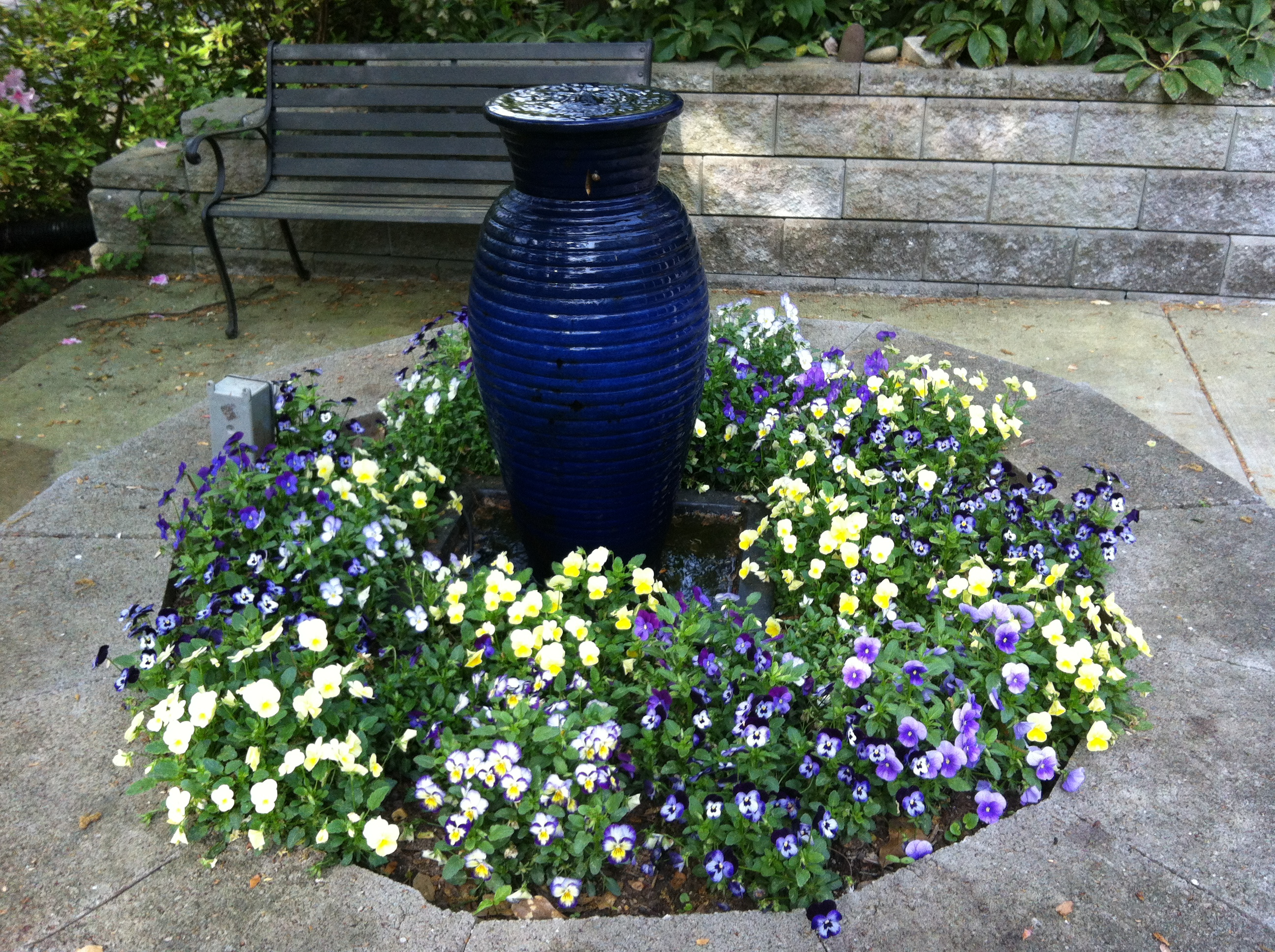 Violas Around My Blue Jar Fountain