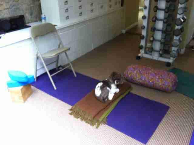 Doggie Yoga, A.K.A, Doga