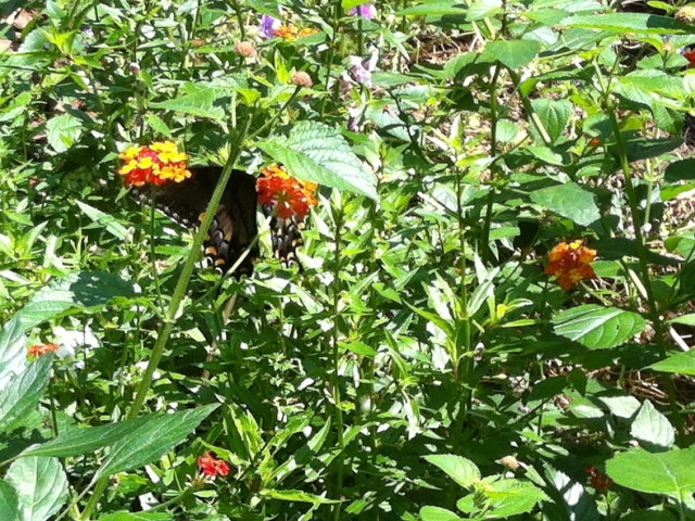 Today's Catch: Butterflyus Wonderfullus