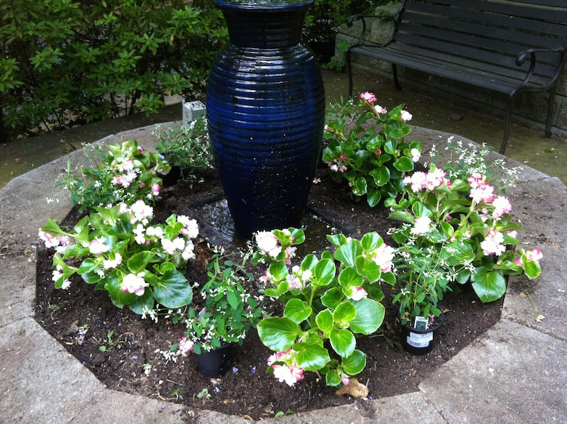 """""""Arrangement of double begonias and euphorbia in a previous spring."""""""