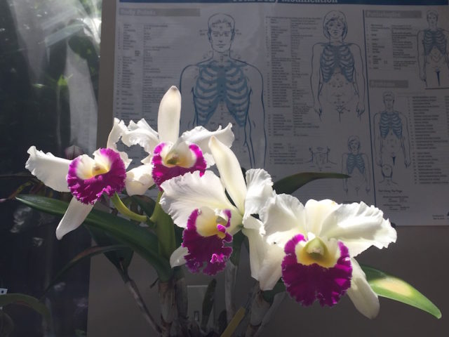 What Can A Medical Intuitive Reading Reveal About Your Pain?
