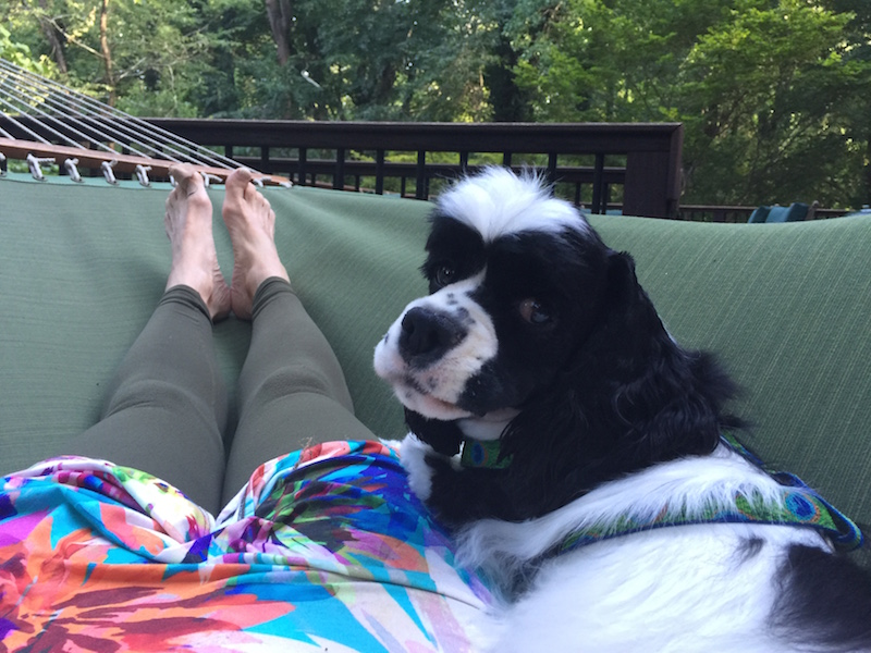 """Dixie snuggling in her hammock before yoga class"""