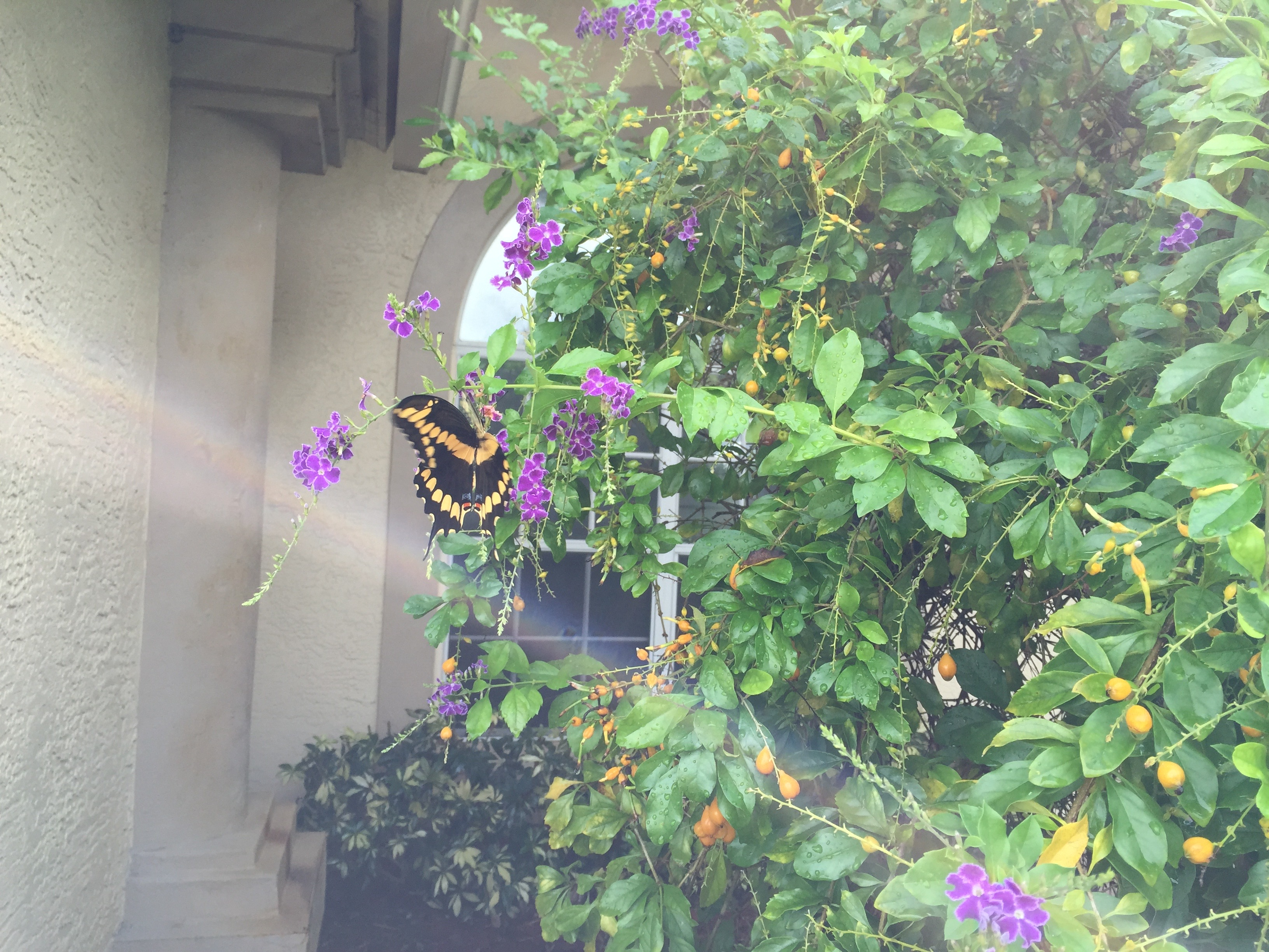 Last Photo of Angel with Yellow Butterfly