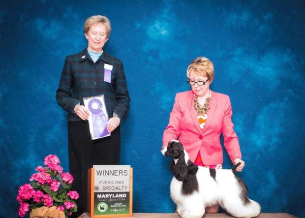 Dixie winning one of her three AKC blue ribbons. She is Miss Georgia, Miss South Carolina and Miss Maryland