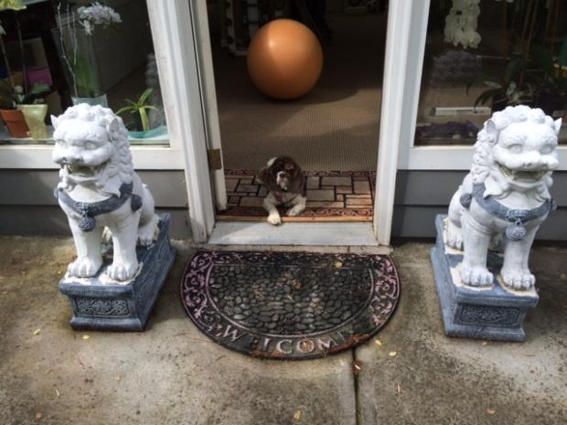 Belle sitting between the foo dogs at the door to my studio