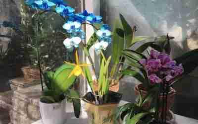 Guest Post by Nina Lynn: Easy Breezy Menopause