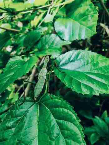 South Africa Garden Grasshopper Photo by Excellent Mtshali