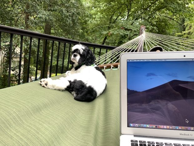 Dixie and my laptop with me in my hammock.