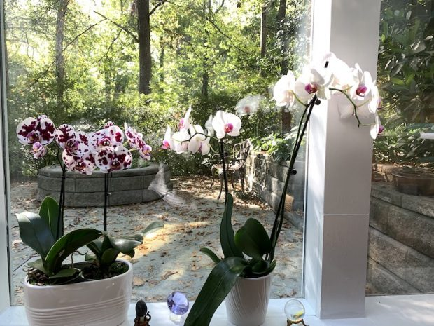 Orchids in my healing room