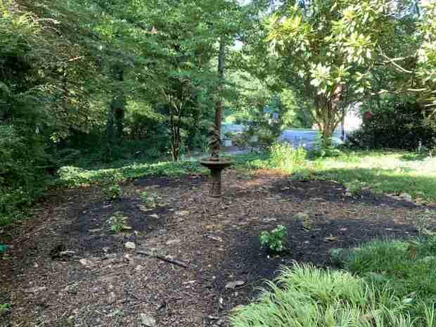 My front garden, July 2020