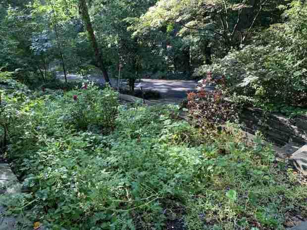 My back garden, July 2020